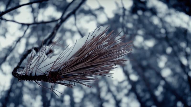 Video aus dem Siebentischwald Augsburg im Winter vom Videograf Marcus Lange Videoproduktion Augsburg